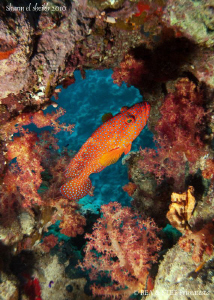 Grouper. Canon G10, W20 Ikelite &amp; Inon D2000. by Bea &amp; Stef Primatesta 